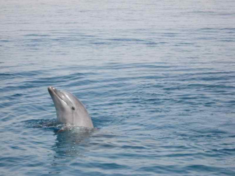 הפלגה משפחתית צפייה בדולפינים