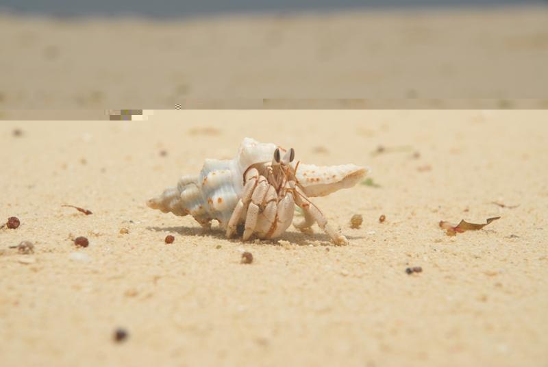 אוצרות טבע בים