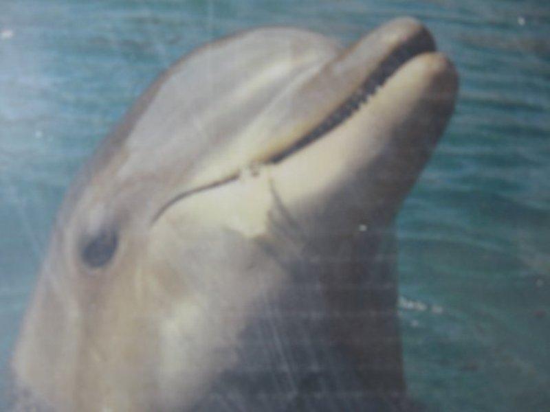 דולפין בים